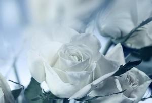 57278__carmela-melania-rea-funerali-300x203