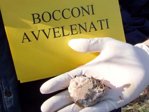 746-2036_bocconi-avvelenati