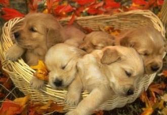 Tassa sui cani e gatti ambientalisti e comuni cittadini for Cani da tenere in casa