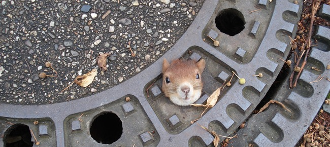 scoiattolo incastrato