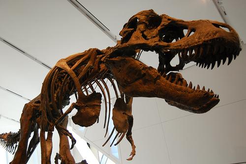 Resti di dinosauro