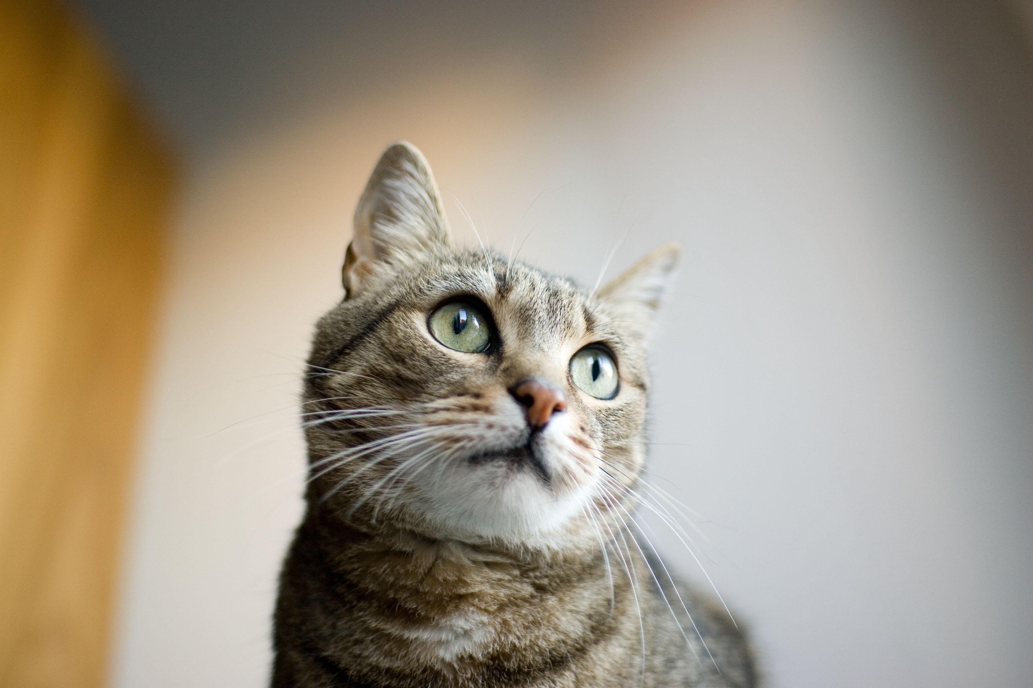 Come far felice il proprio gatto for Il gatto inverno