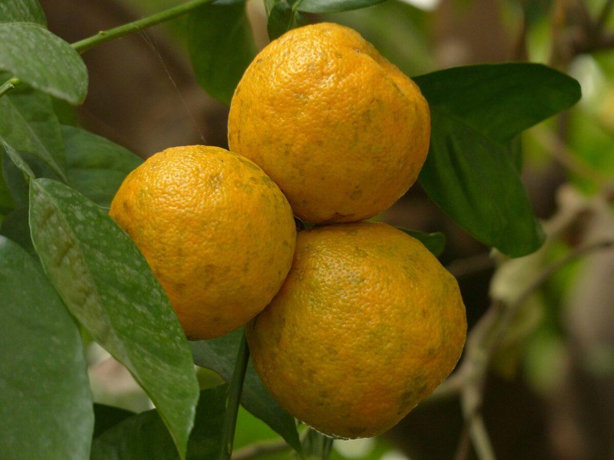 cellulite buccia arancia